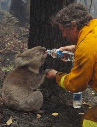 Image: Sam drinking water from fire fighter