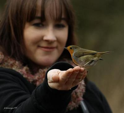 Image: A robin perched on a girl's hand